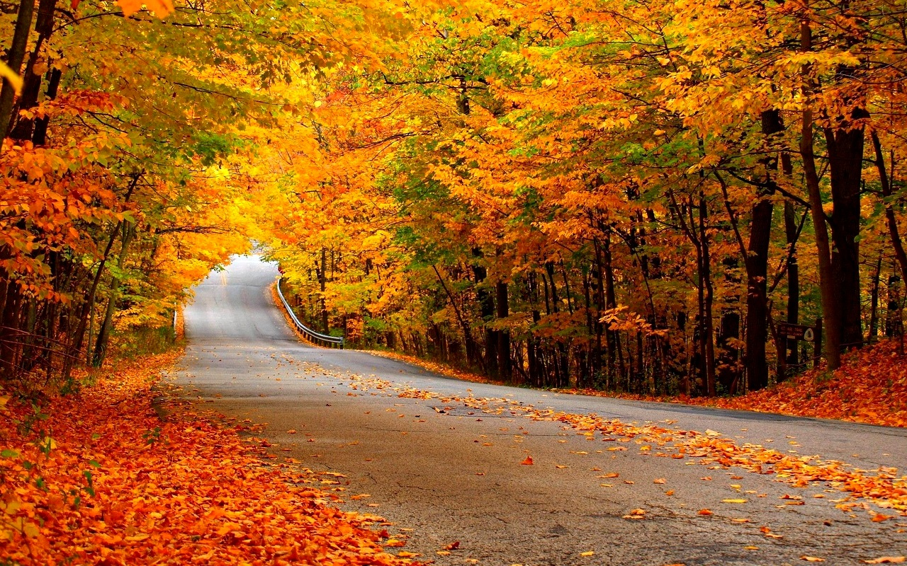 Collection of Autumn Nature Wallpaper on HDWallpapers 1280x800