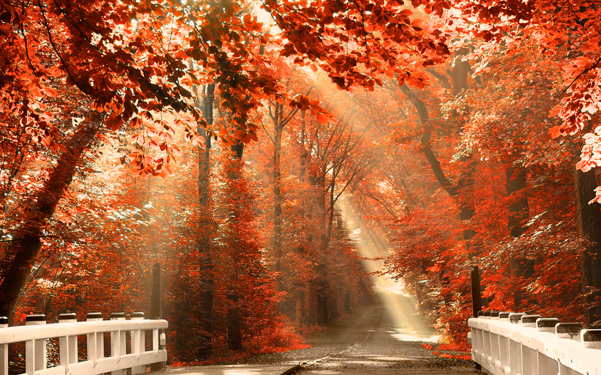 Autumn Wallpapers Download 021