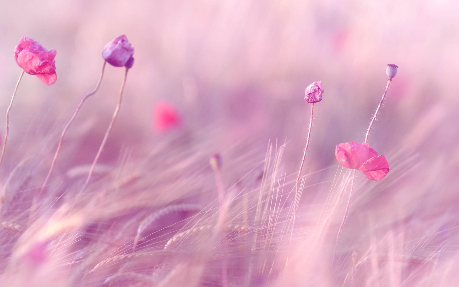 Background Images Flowers Pink 36 Background Images Flowers Pink 36