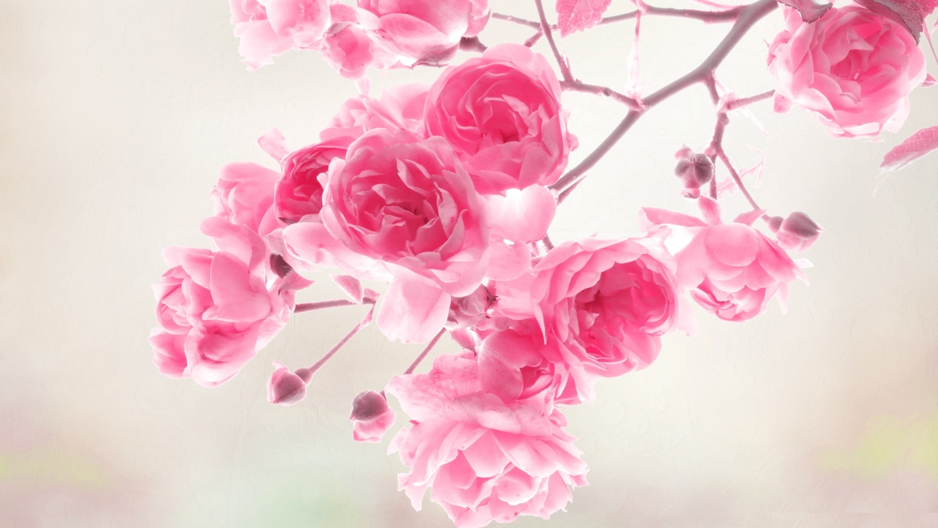 Background Images Flowers Pink 27 Wallpapers Adorable Wallpapers