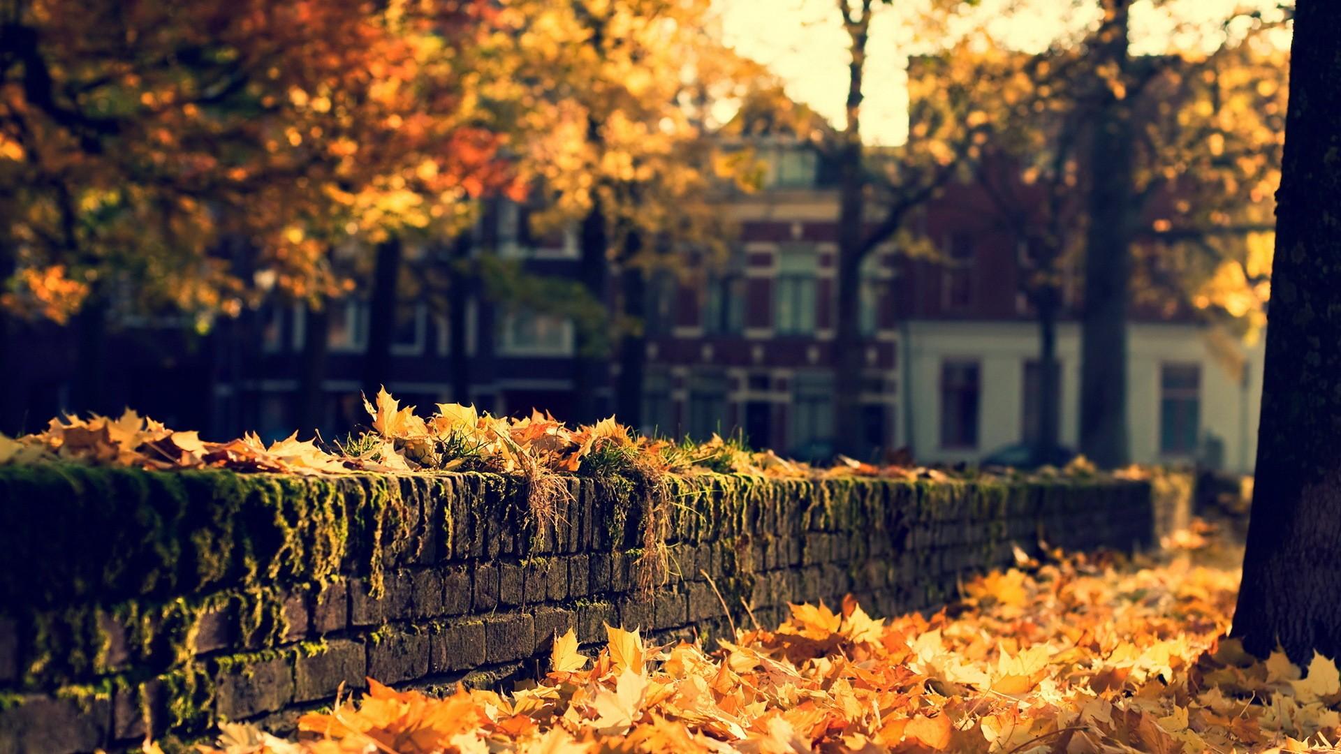 Free Autumn Desktop Wallpaper Backgrounds Wallpaper 1920x1080