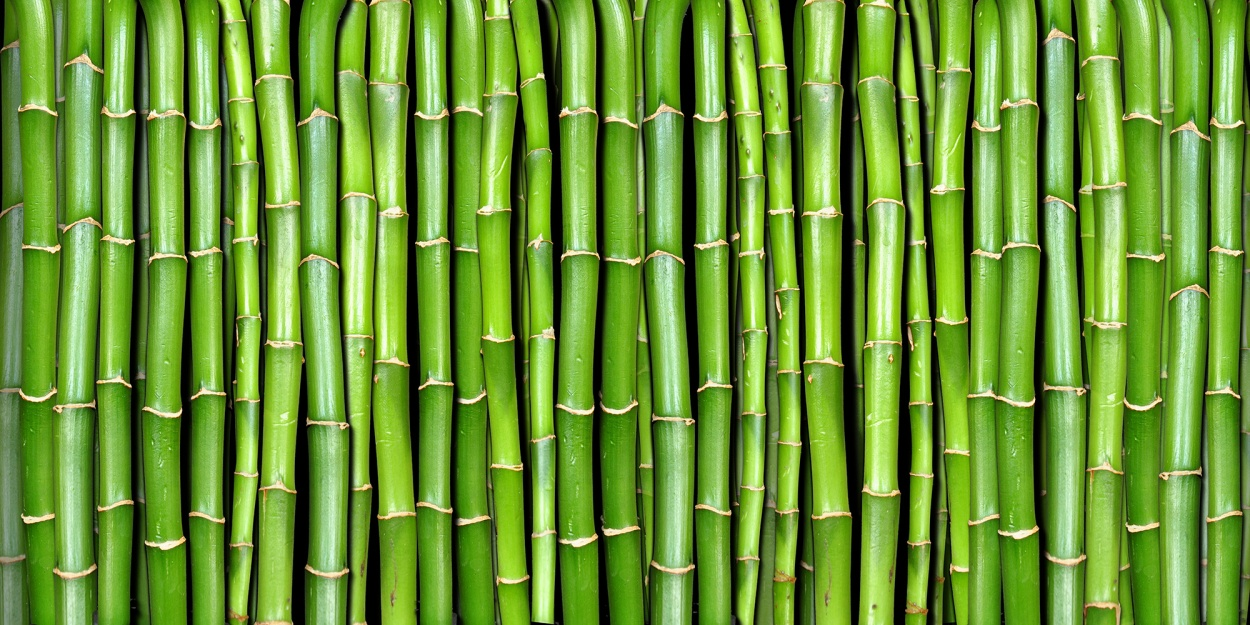 Bamboo wallpaper 35 wallpapers adorable wallpapers for Bamboo wallpaper for walls