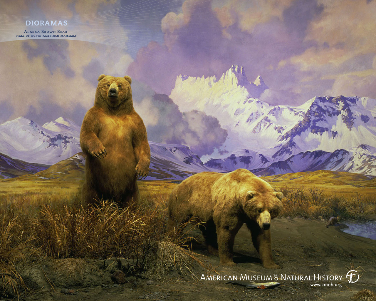 Bear Wallpaper Iphone For Android Boneka Background Hd Couple 1280x1024