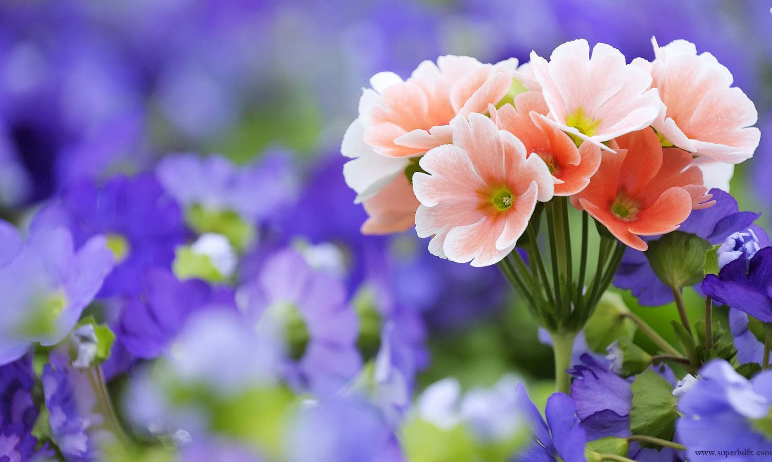 Beautiful Spring Day HD desktop wallpaper : High Definition 1504x900