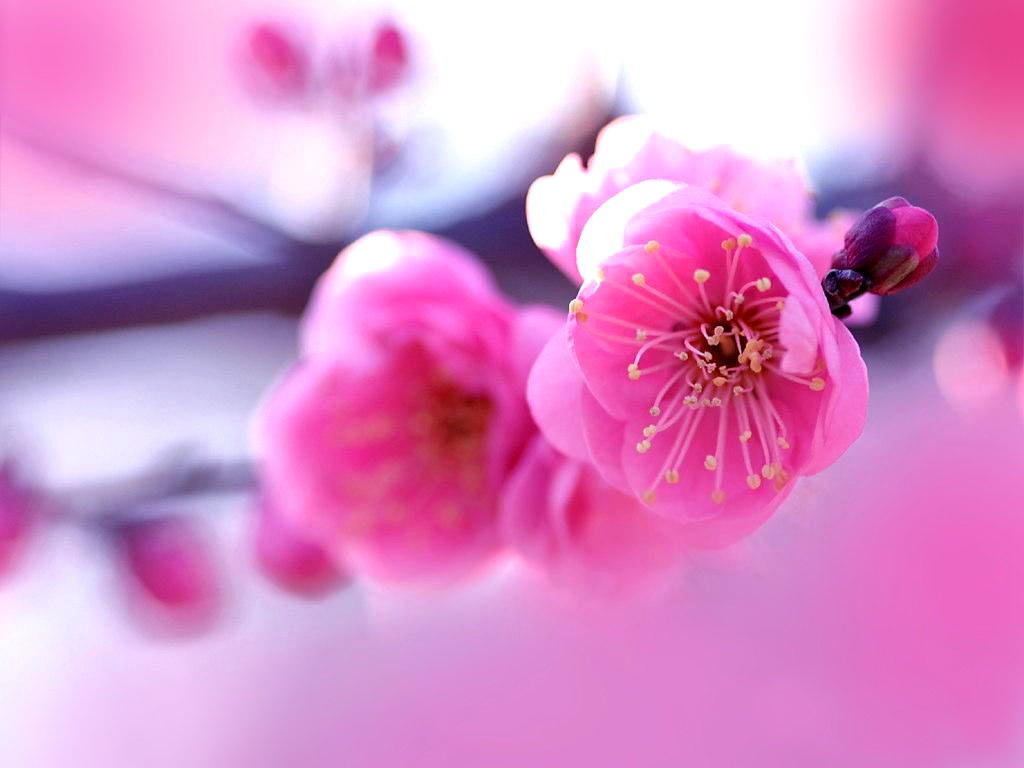 best ideas about Beautiful Flowers Wallpapers on Pinterest 1024x768