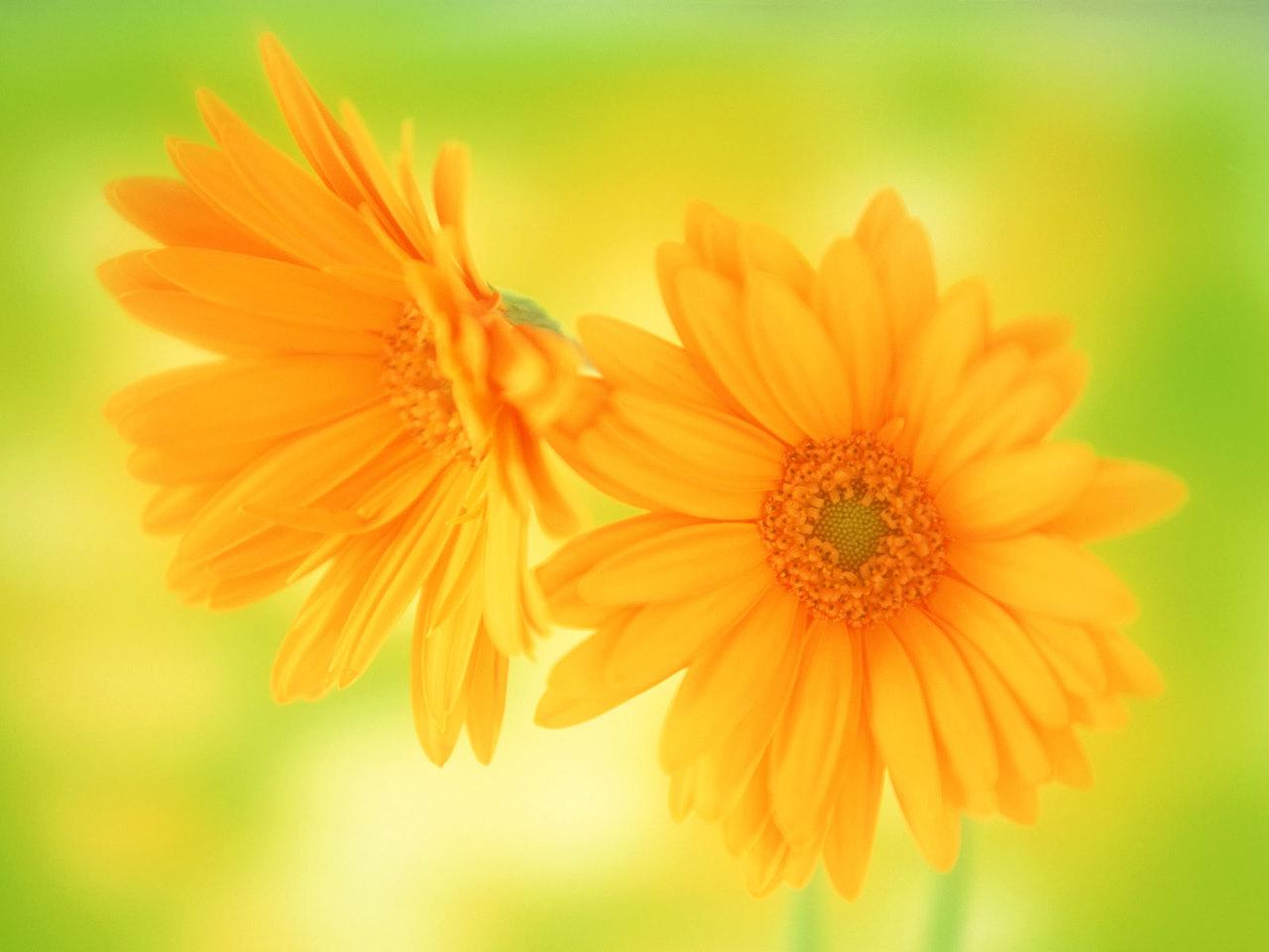 wallpaper: beautiful flowers wallpaper free download 1280x960