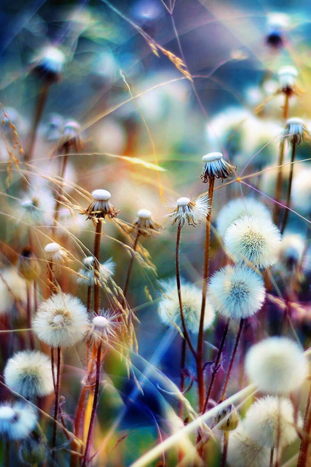 Beautiful wallpapers for iphone 40 wallpapers adorable - Beautiful nature wallpapers for iphone ...