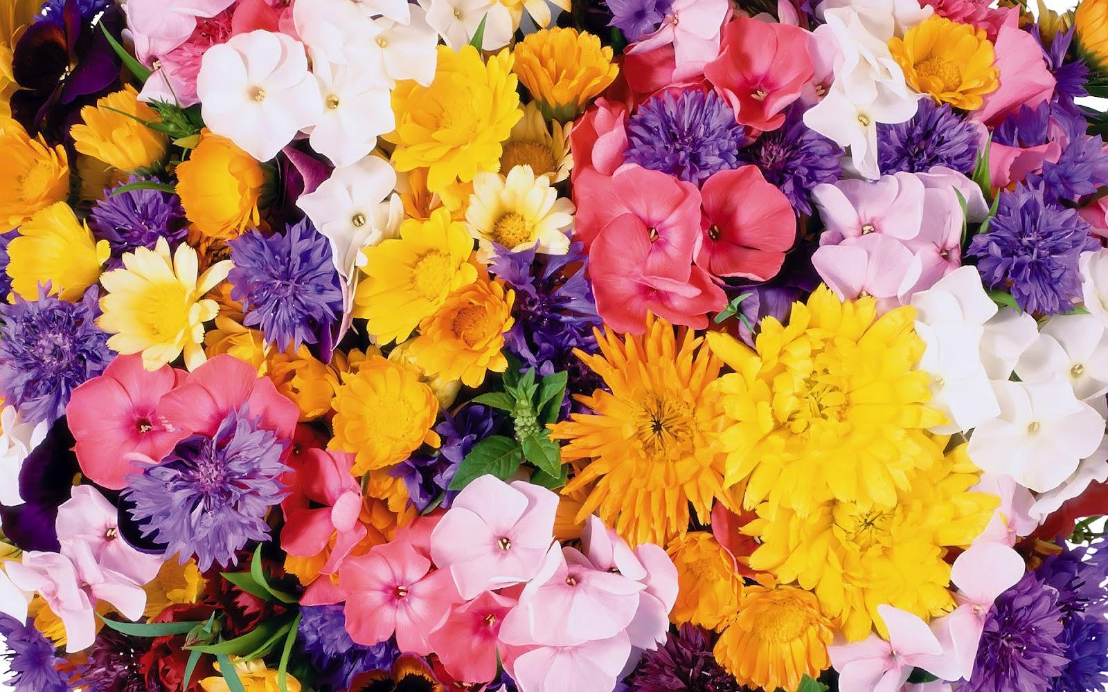 Best Flowers Wallpapers HD (50 Wallpapers)