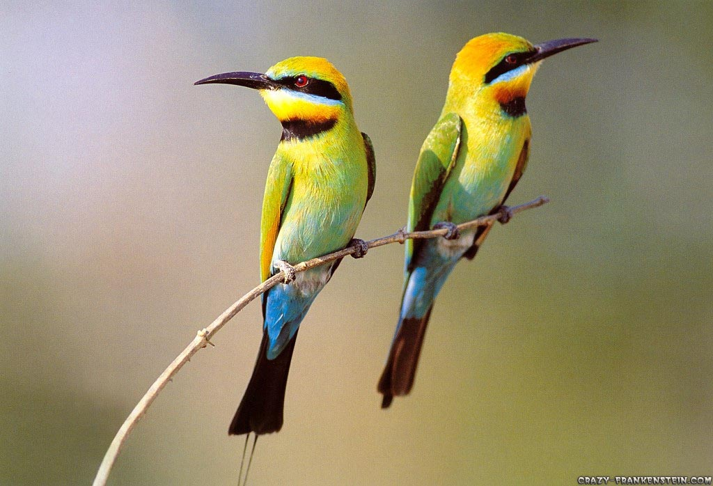 Three Birds Wallpaper photo and wallpaper Bird Wallpapers  Free Download Beautiful Colorful HD Desktop Images 1024x698