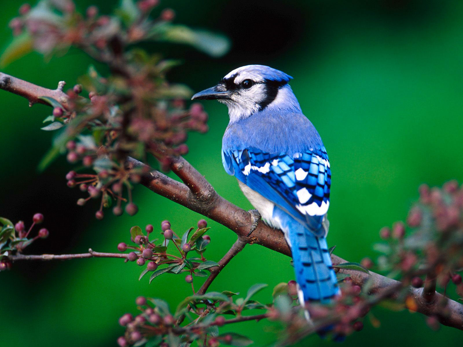animal birds wallpapers android apps on google play 1600a—1200
