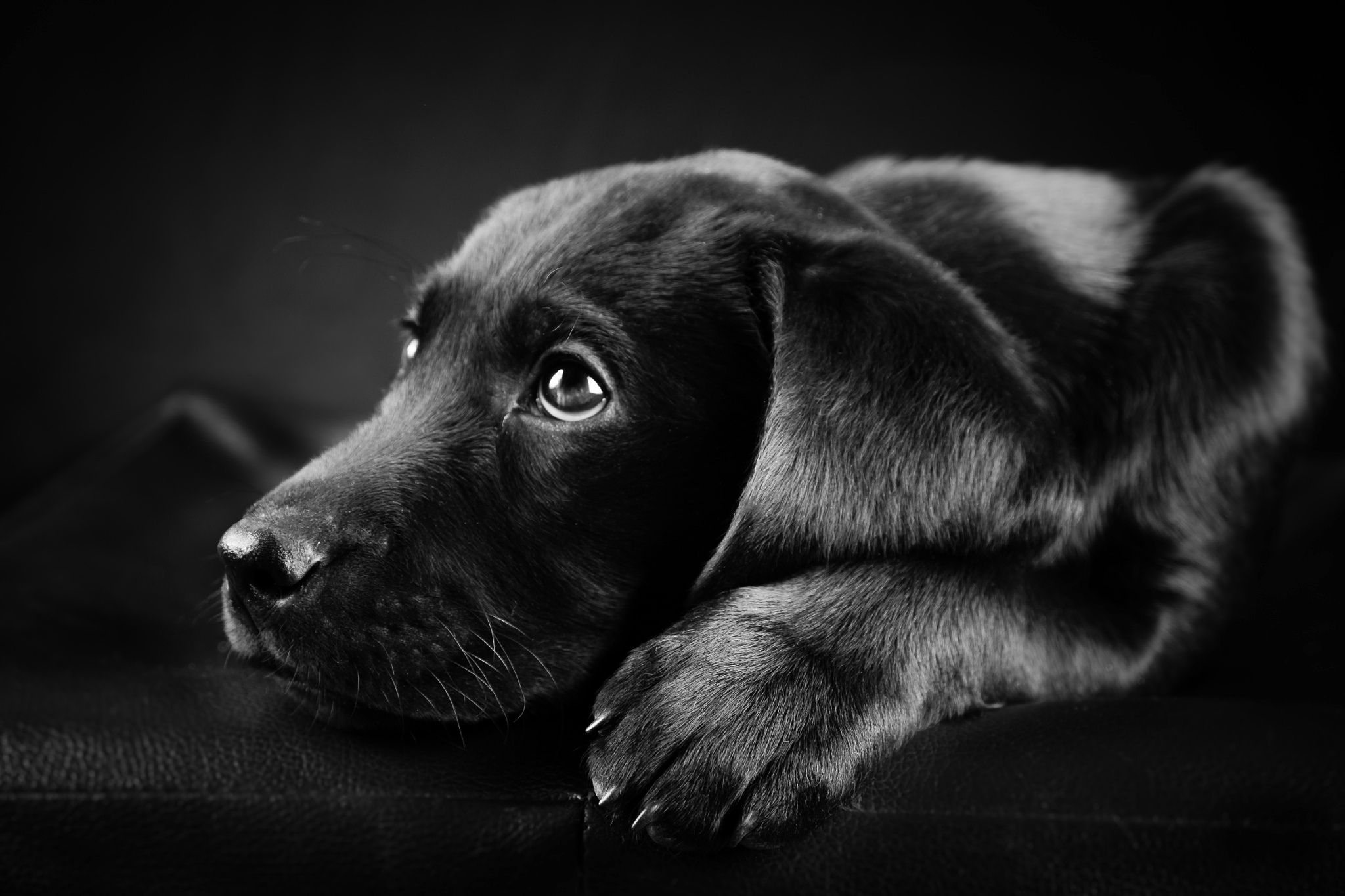 black and white dog wallpapers (48 wallpapers) – adorable wallpapers