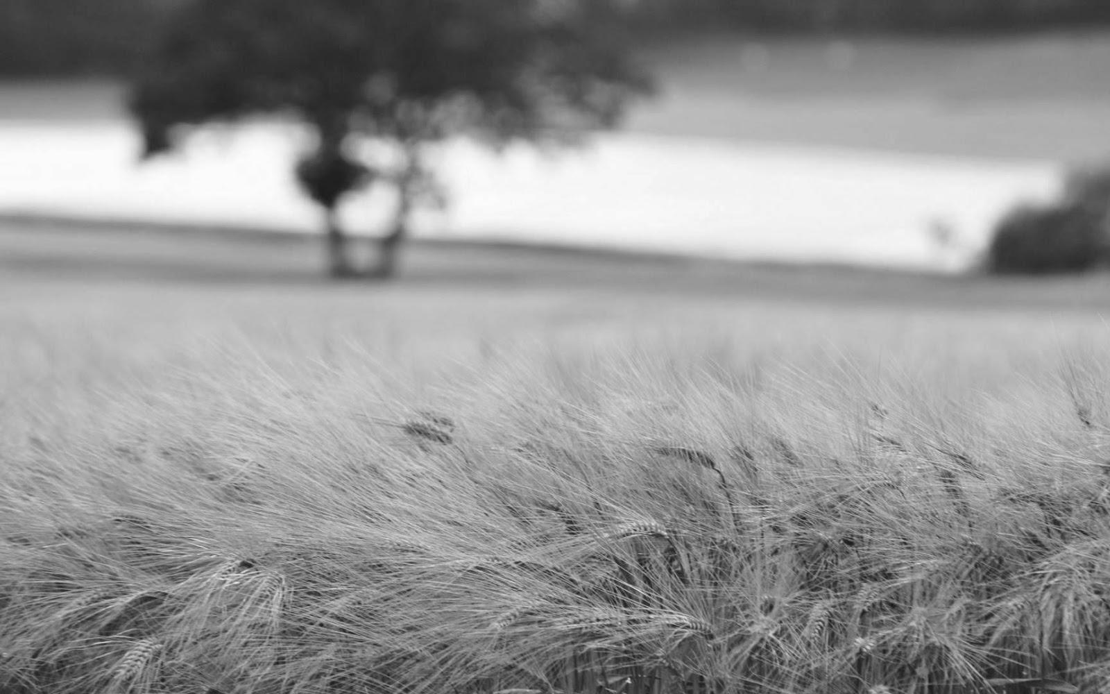 Free black and white photography · pexels · free stock photos 1600x1000