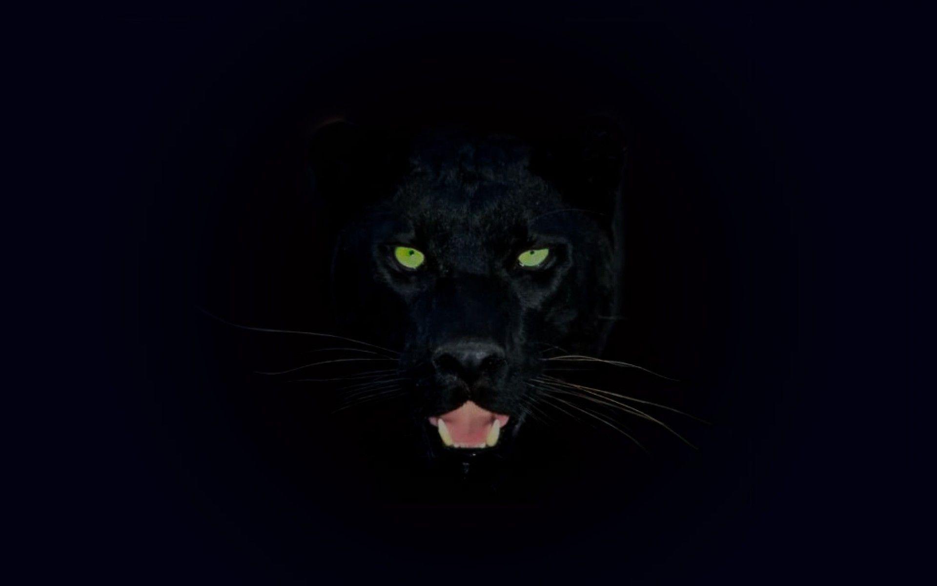 Fondos 4k Hd De Panteras Negras: Black Jaguar Wallpapers (45 Wallpapers)
