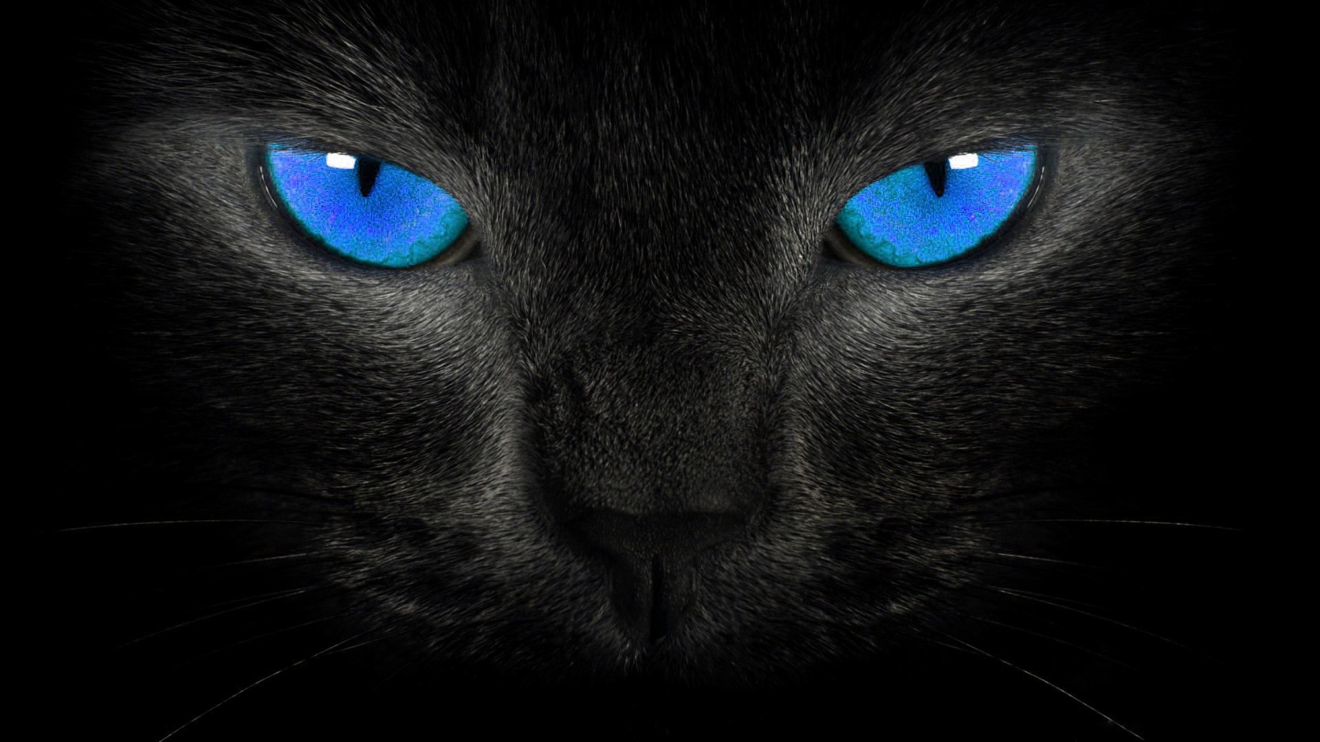 hdcatwallpapersblueeyescatwallpaper  HD Wallpapers 1920x1080
