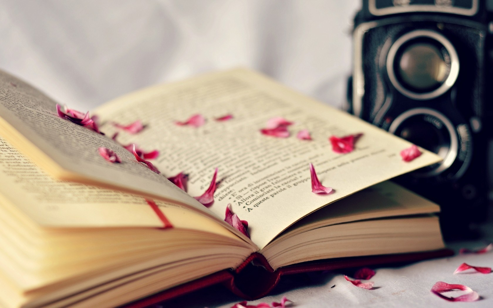 A Book On The Beach Widescreen Wallpaper Widewallpapers Books