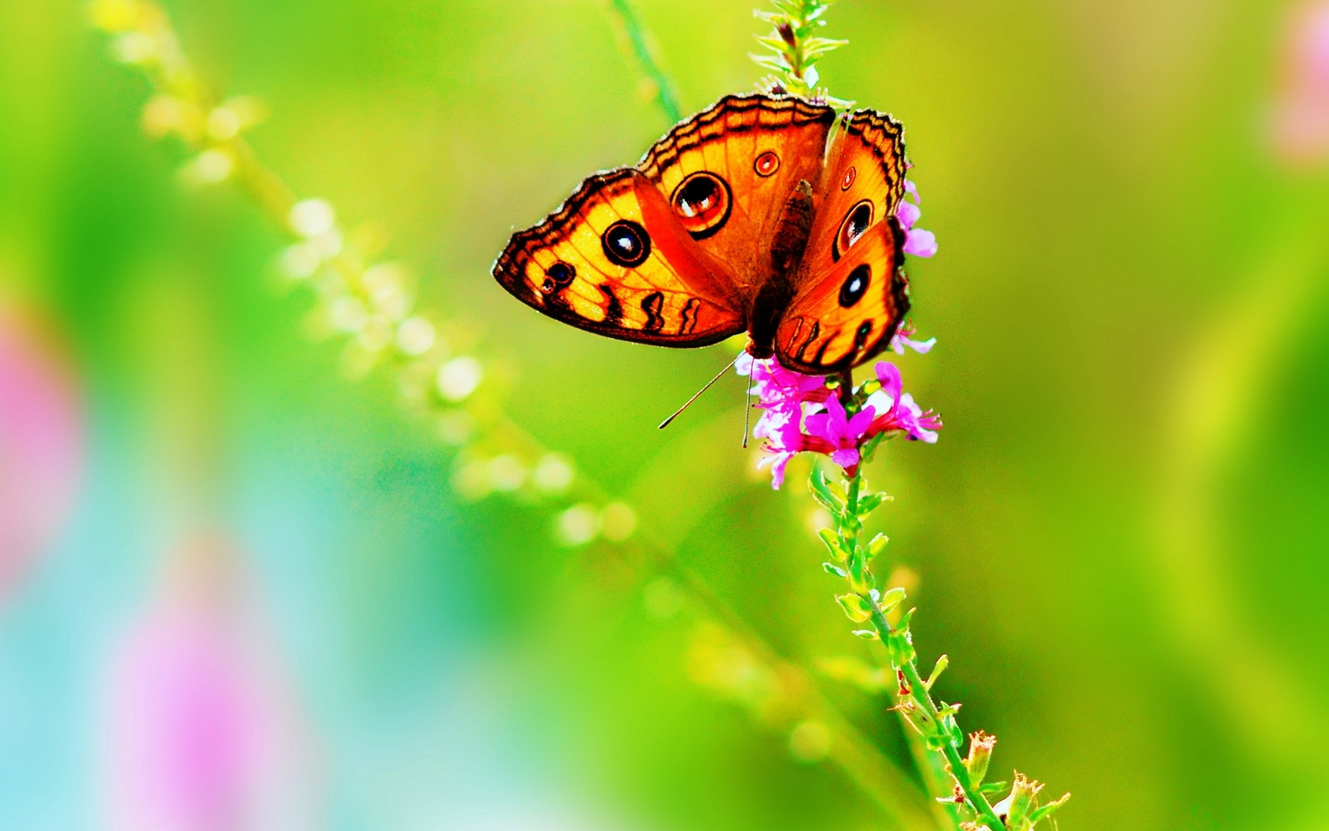 butterfly images wallpapers (36 wallpapers) – adorable wallpapers