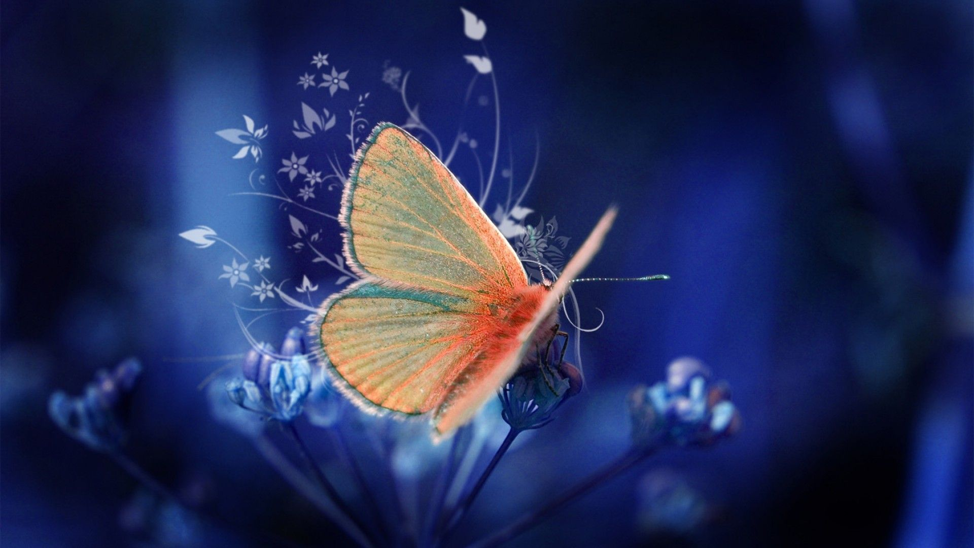 butterfly wallpapers free download (52 wallpapers) – adorable