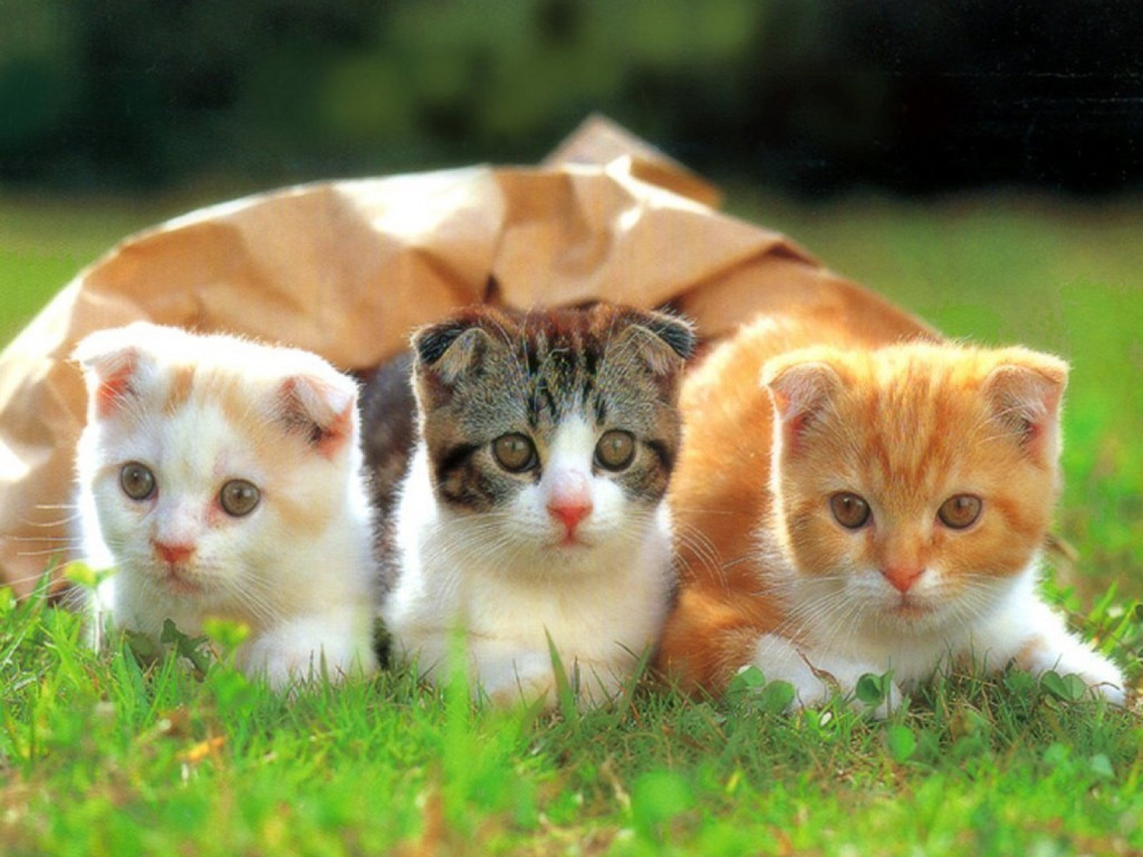 Cat Wallpapers Free Download Latest Cute Hd Animal Desktop Images 1600x1200