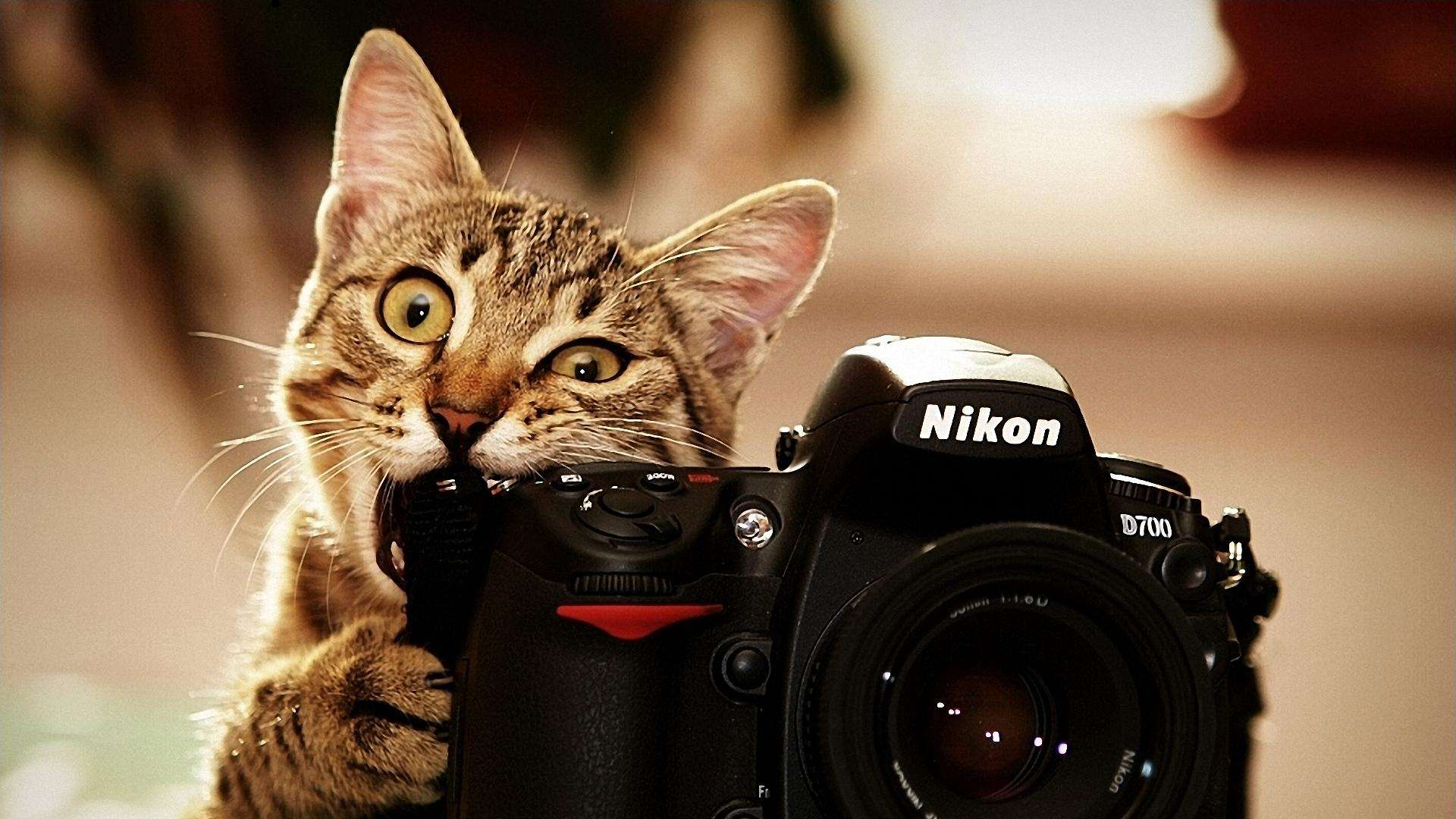Hd wallpaper cat - Cat Hd Wallpapers For Pc Amazing Wallpaperz 1920 1080