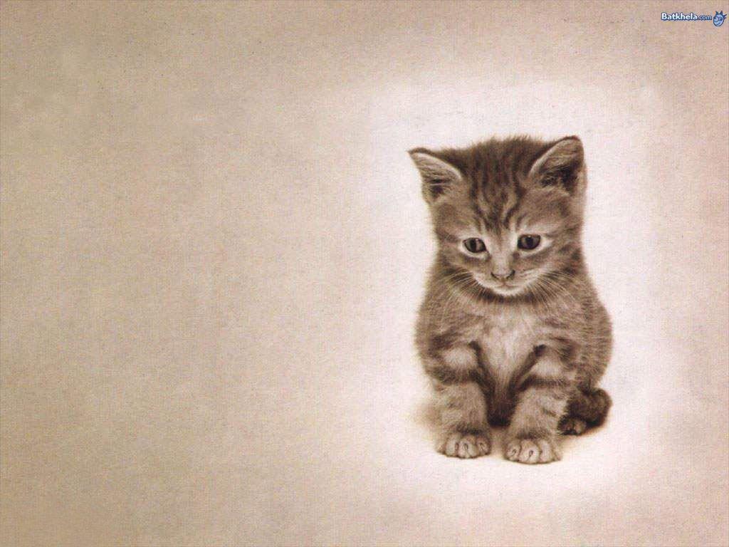 Cat Mobile Wallpapers 16