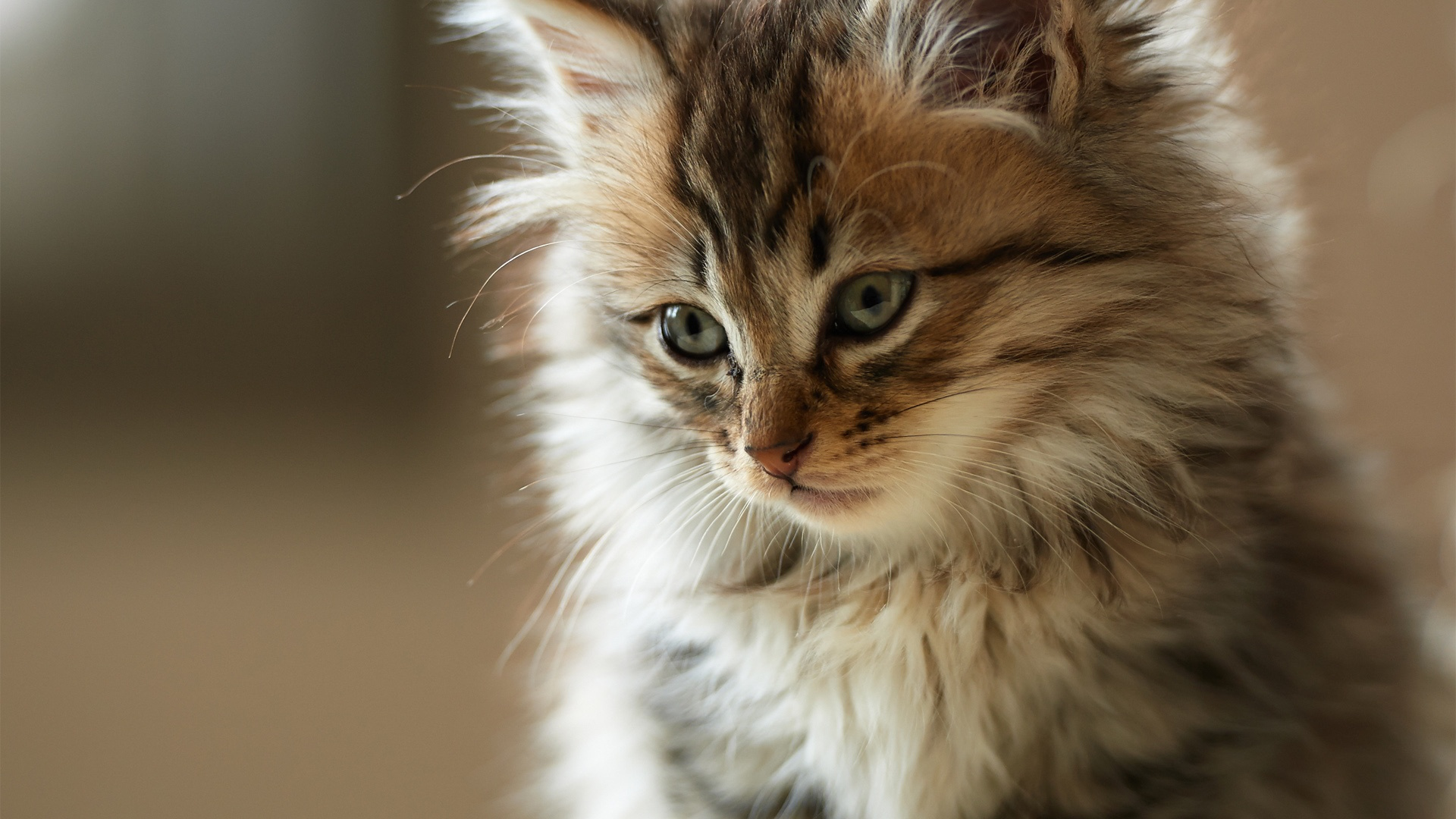 Cat Wallpapers 1920\u00d71080 58 Wallpapers \u2013 Adorable Wallpapers