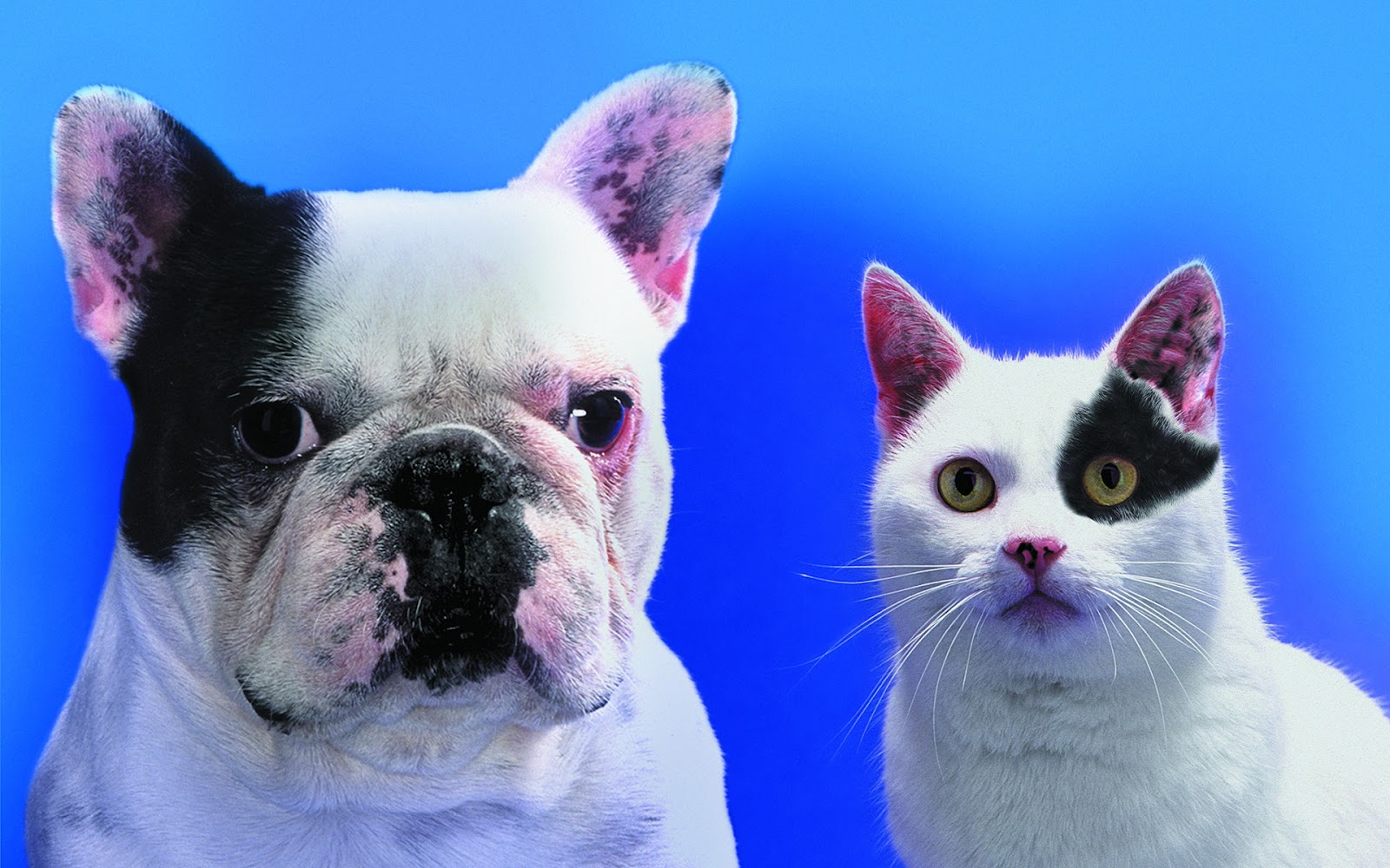 Cats And Dogs Wallpapers WallpapersInk HD Cute Puppies Kittens On The App Store 1600x1000
