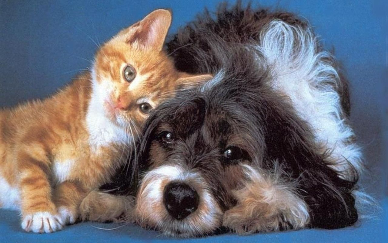 Fantastic Cute Dog N Cat Wallpapers - Cats-And-Dogs-Wallpapers-047  Best Photo Reference_846048 .jpg