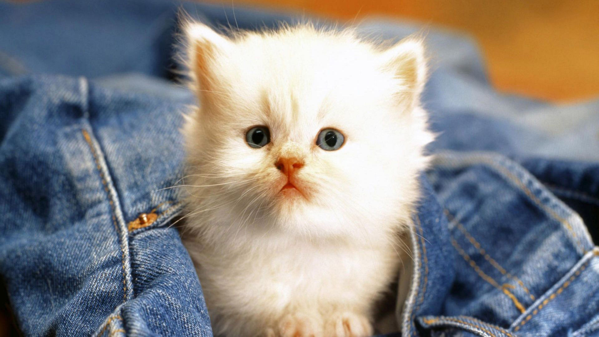cats wallpapers cute cats and kittens wallpapers for iphone 1920x1080