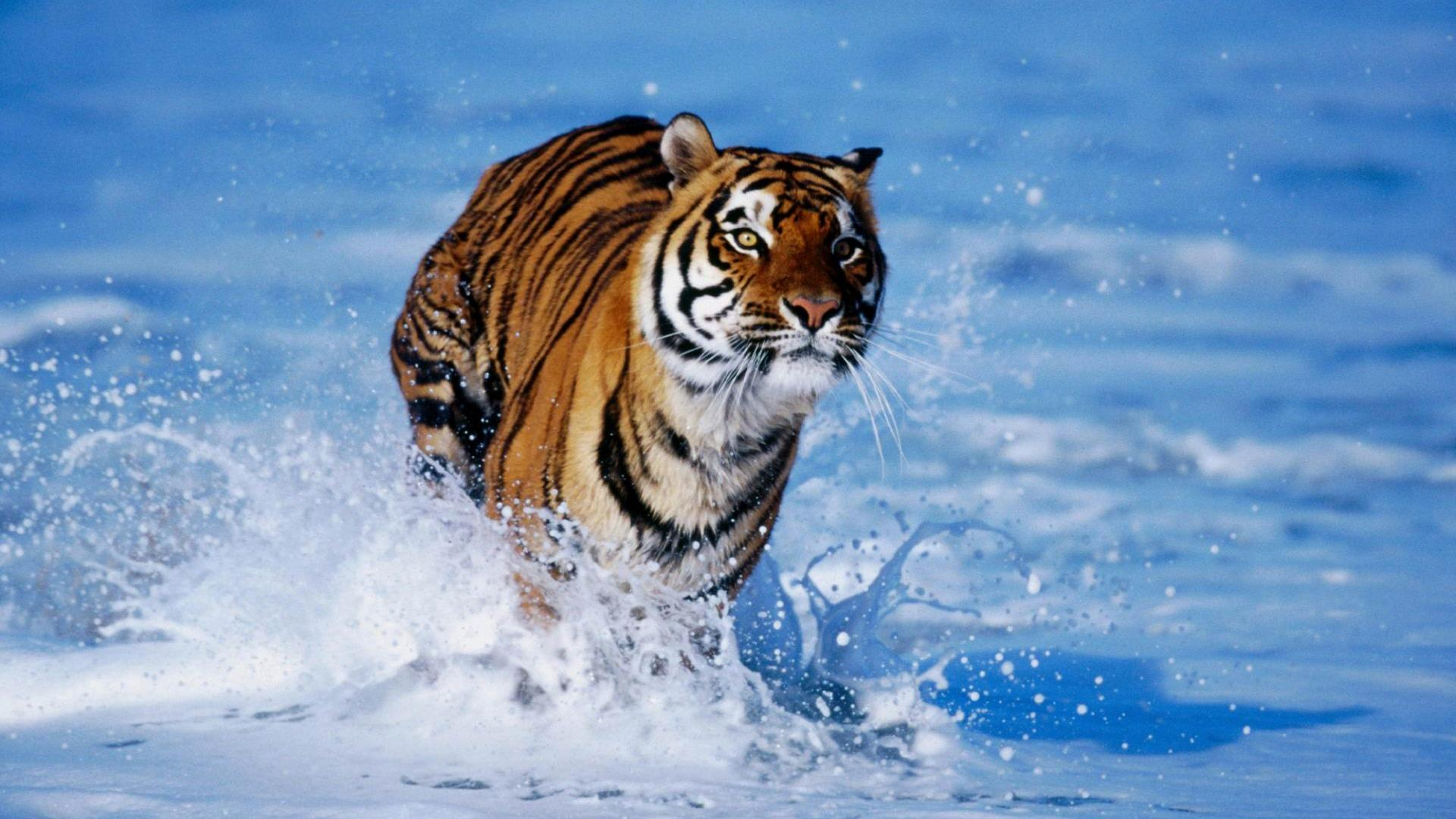 Cool Animal Wallpaper Light Images Free Download 1920x1080