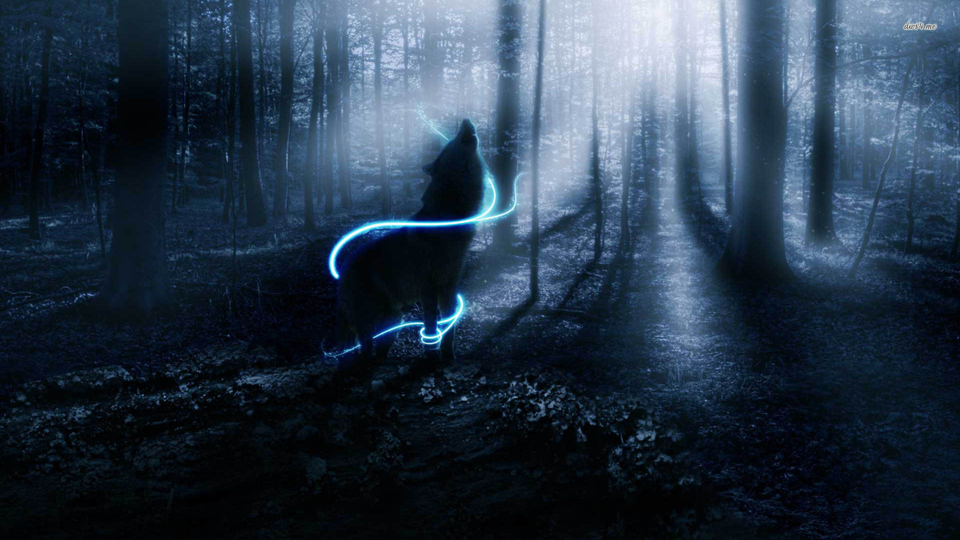Cool Wolf Backgrounds  Wallpaper  1920x1080