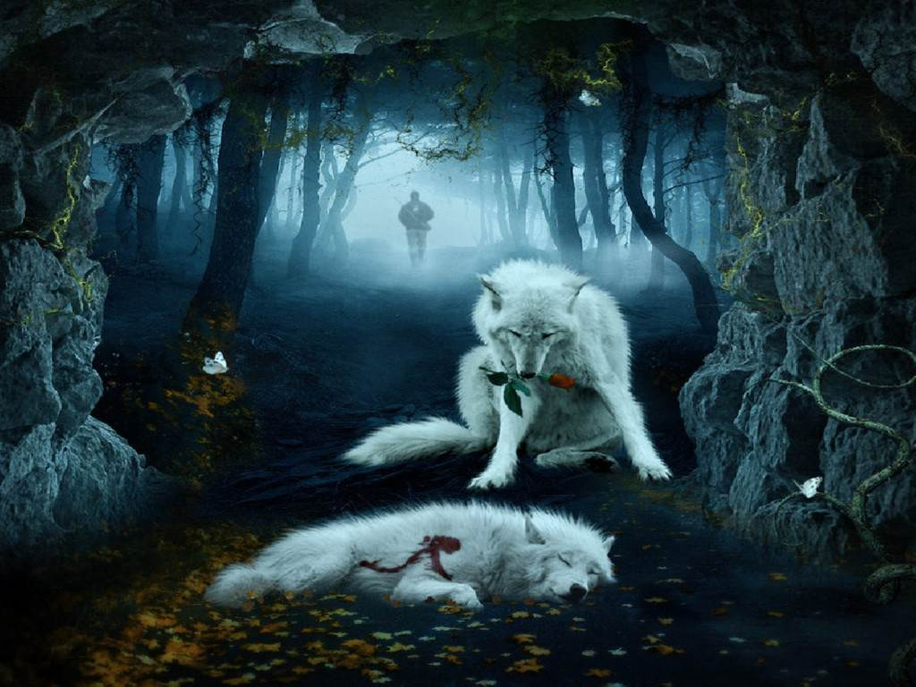 cool wolf backgrounds 47 wallpapers adorable wallpapers. Black Bedroom Furniture Sets. Home Design Ideas
