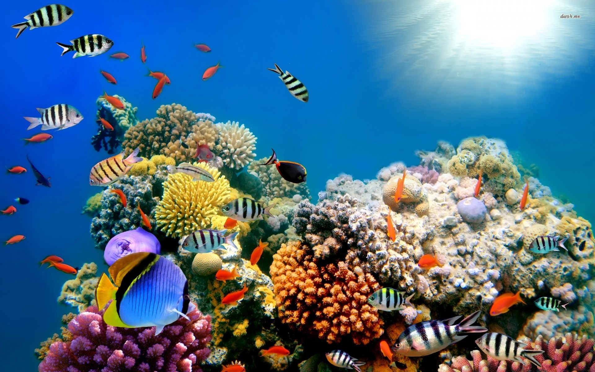 Coral Reef Live Wallpapers free app download for Android 1920x1200