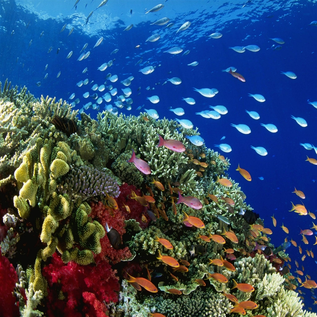 Coral Reef Background: Coral Reef Images Wallpapers (40 Wallpapers)
