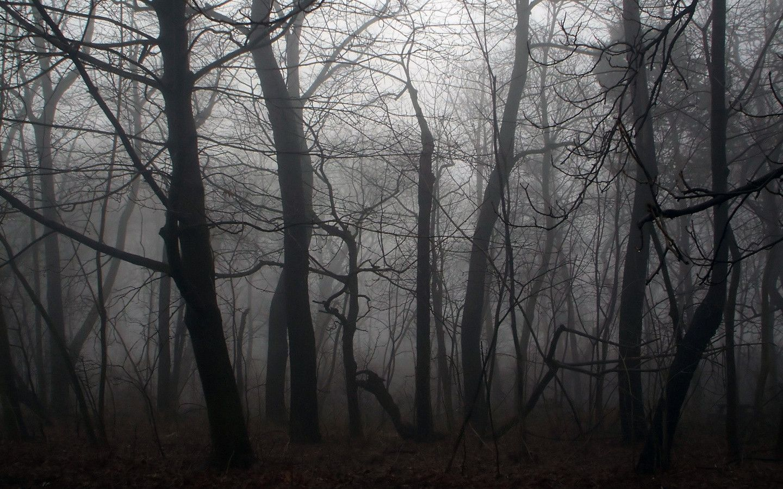 Creepy forest wallpaper