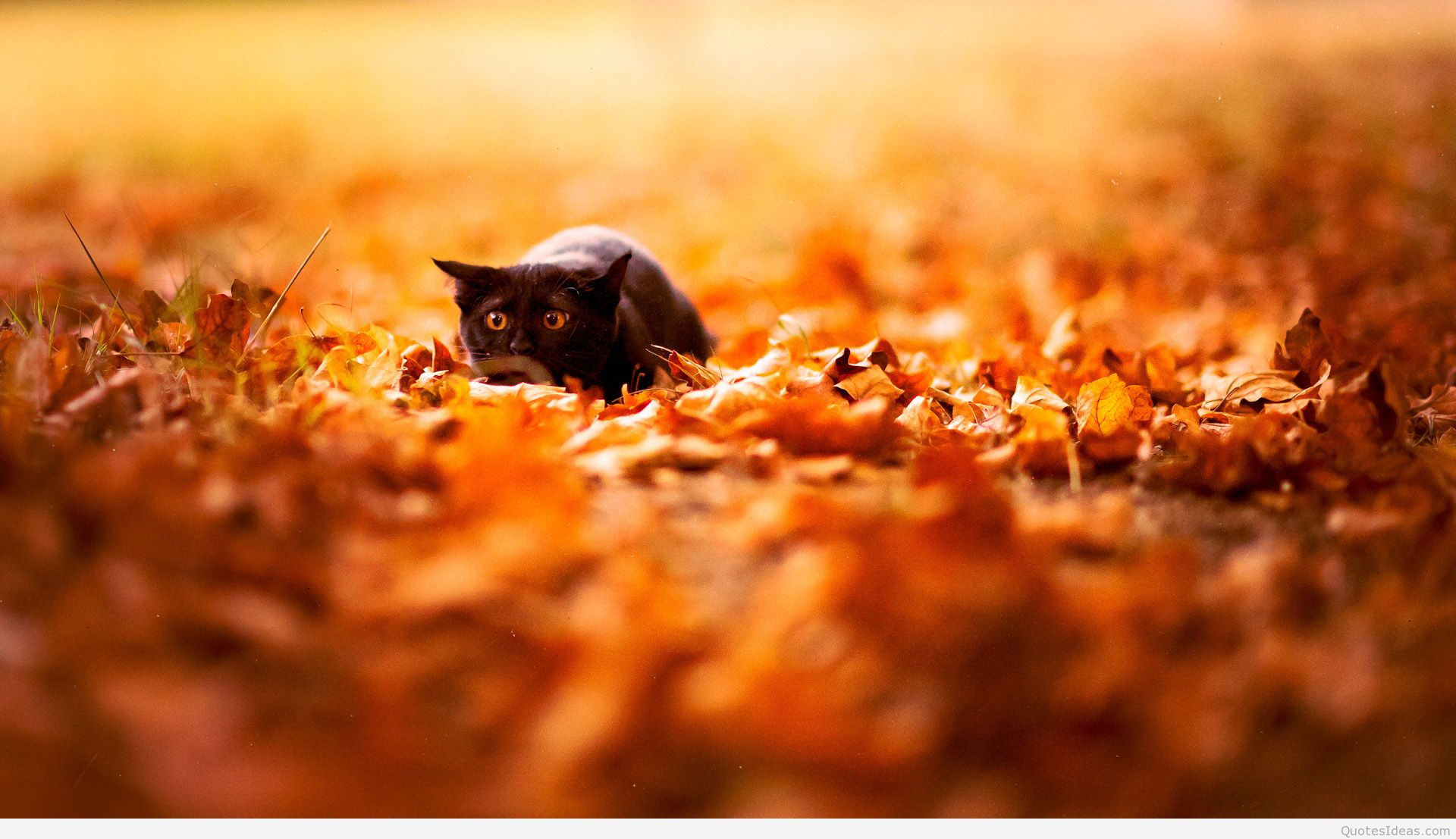Cute Autumn Wallpapers (23 Wallpapers) - Adorable Wallpapers