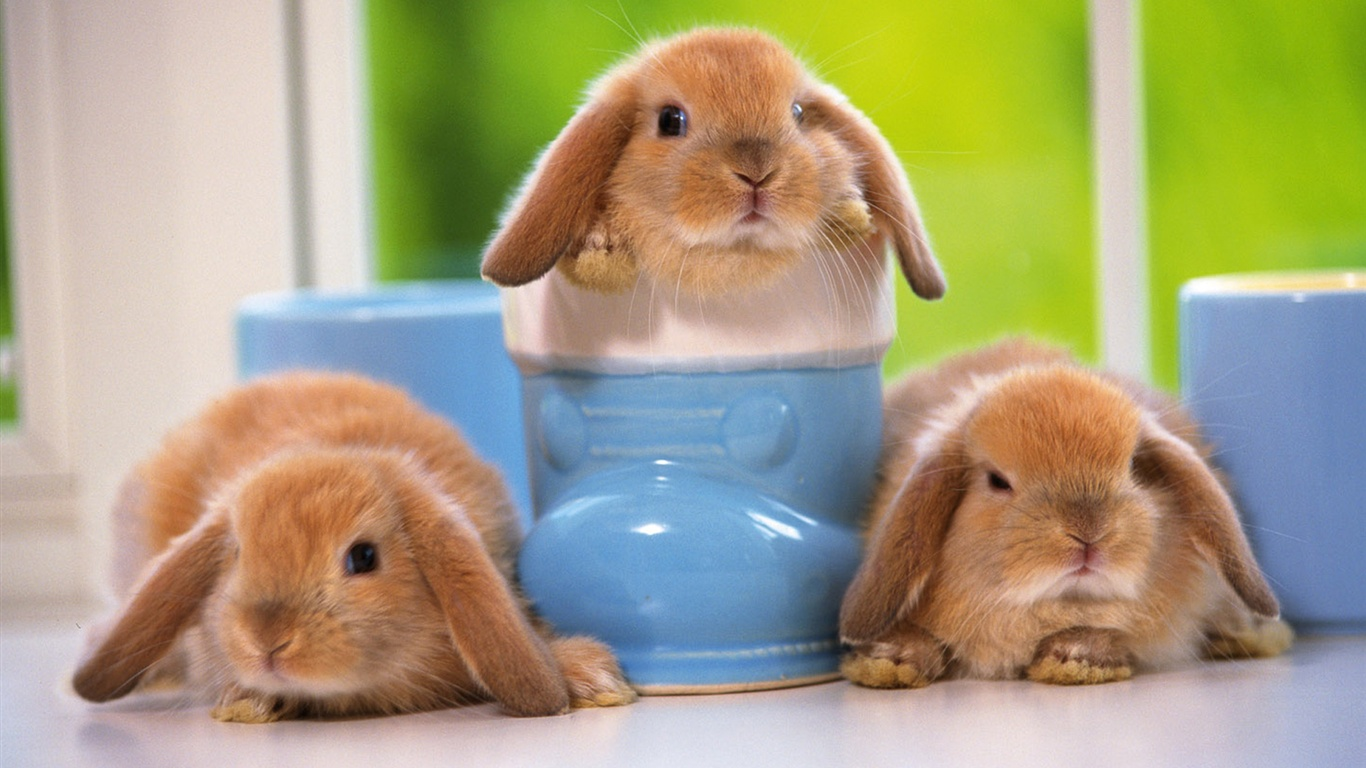 White Bunny Wallpapers High Quality Fannone Cute Wallpaper Free Download 1366x768