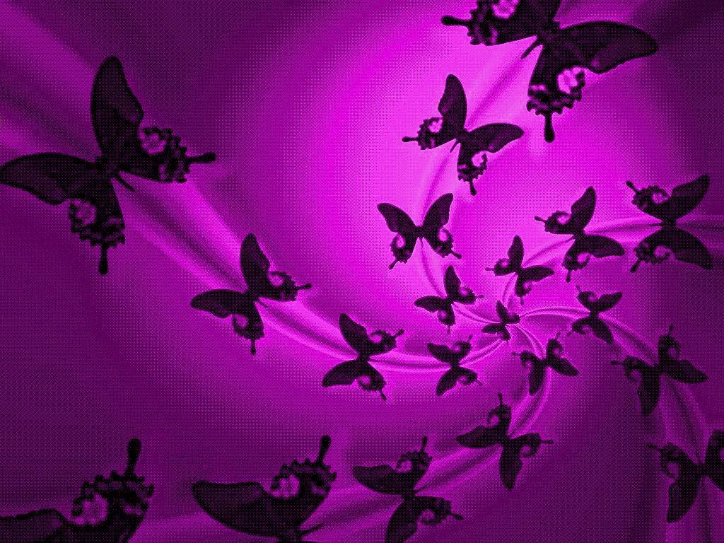 Cute Butterfly Backgrounds Group  1024x768