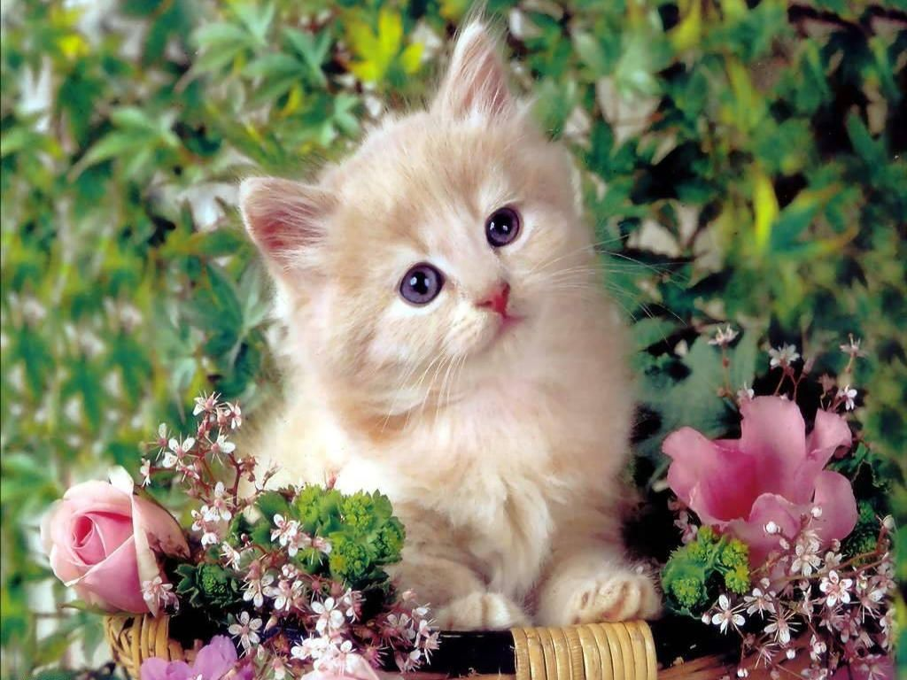 Cute Cat Wallpapers 46 Wallpapers – Adorable Wallpapers