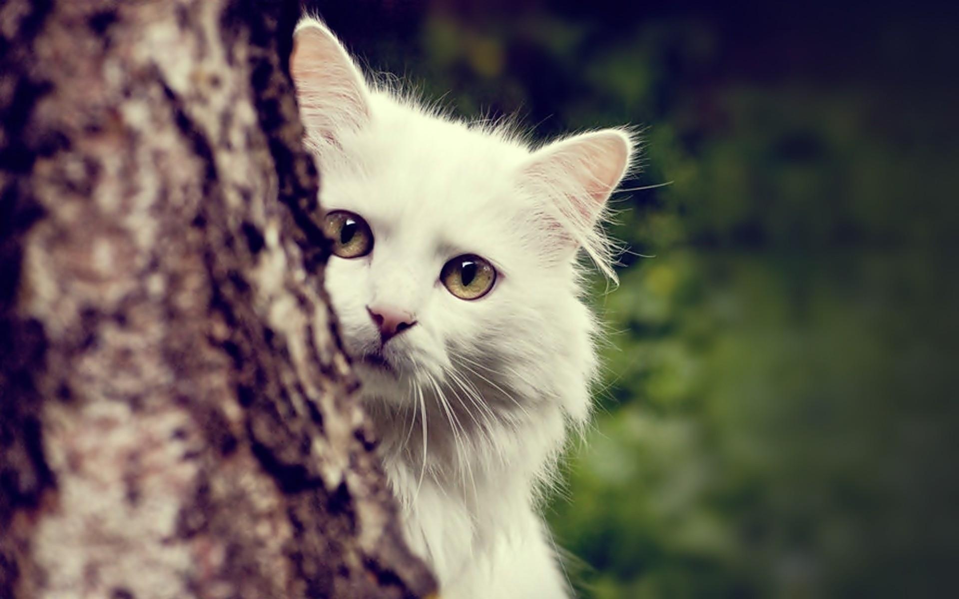 Stunning Cute Cat Hd Wallpapers Te Beautiful Cute Cats Wallpapers Hd Pictures Live Hd Wallpaper 1920x1200