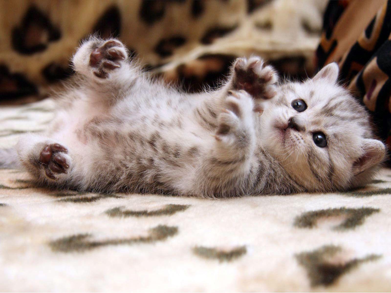 Cute Cat Iphone Wallpaper 1600x1200
