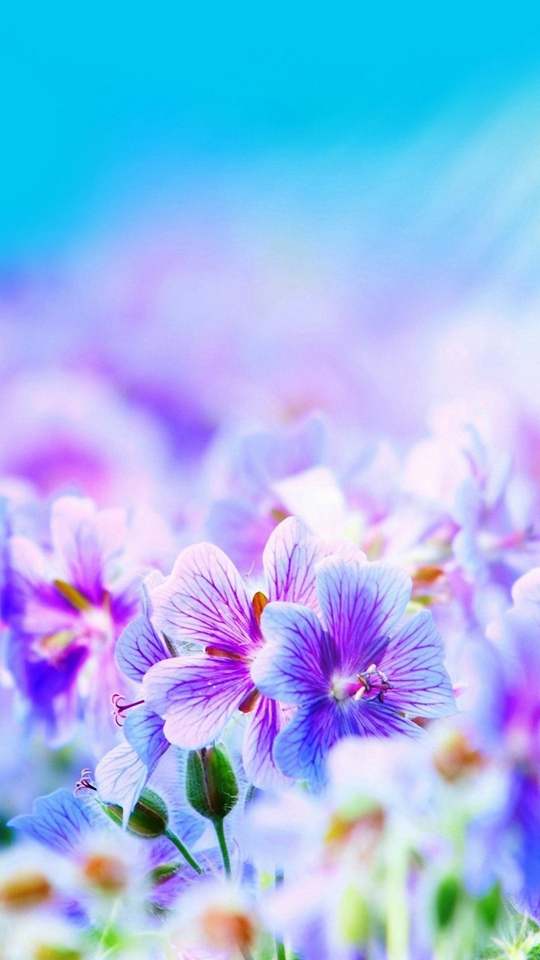 cute flowers images wallpapers  wallpapers  adorable wallpapers, Natural flower