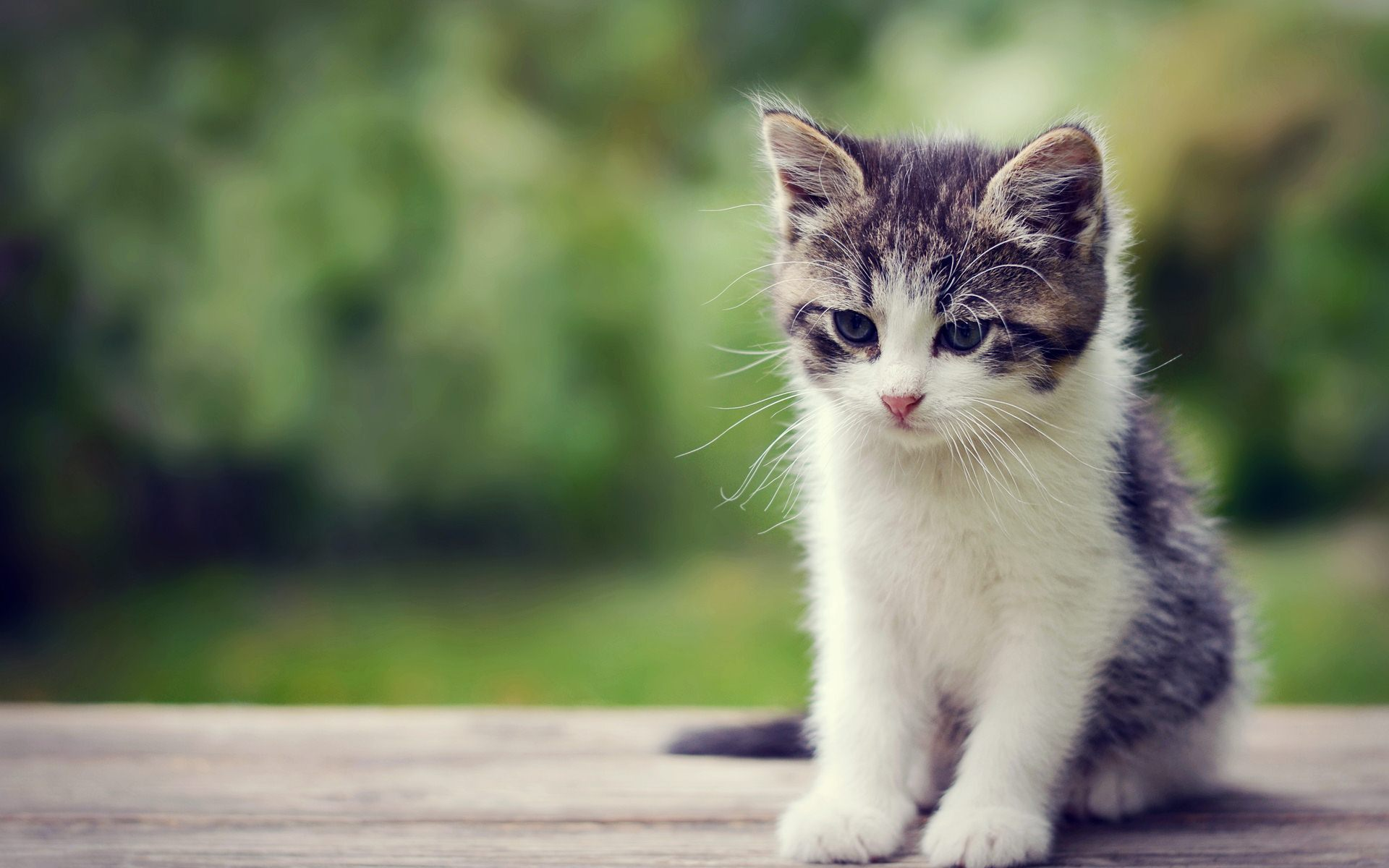 Cute Kitten Wallpapers 44 Wallpapers – Adorable Wallpapers