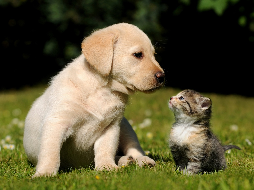 Cute Puppies Dogs Pics Description Lovely Puppy Dog Wallpaper 1024x768