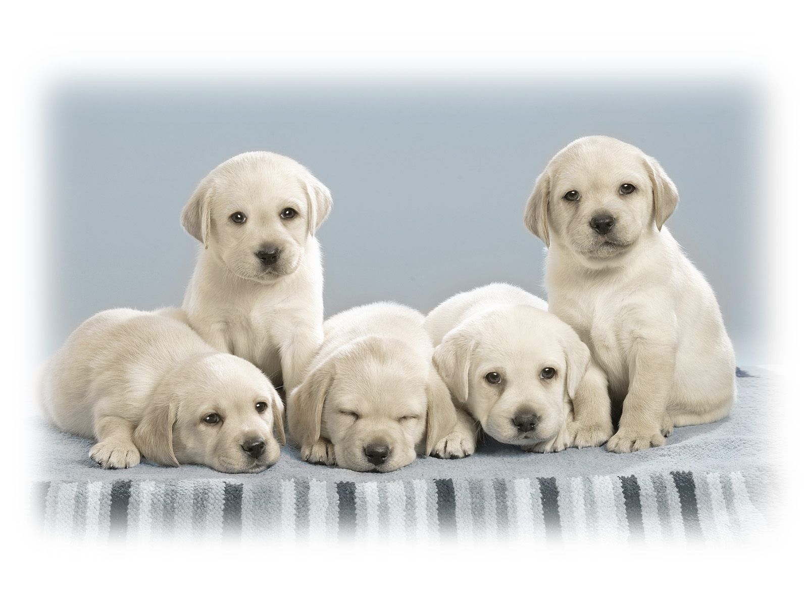 Ideas About Cute Puppy Wallpaper On Pinterest Cute Puppies 1600x1200