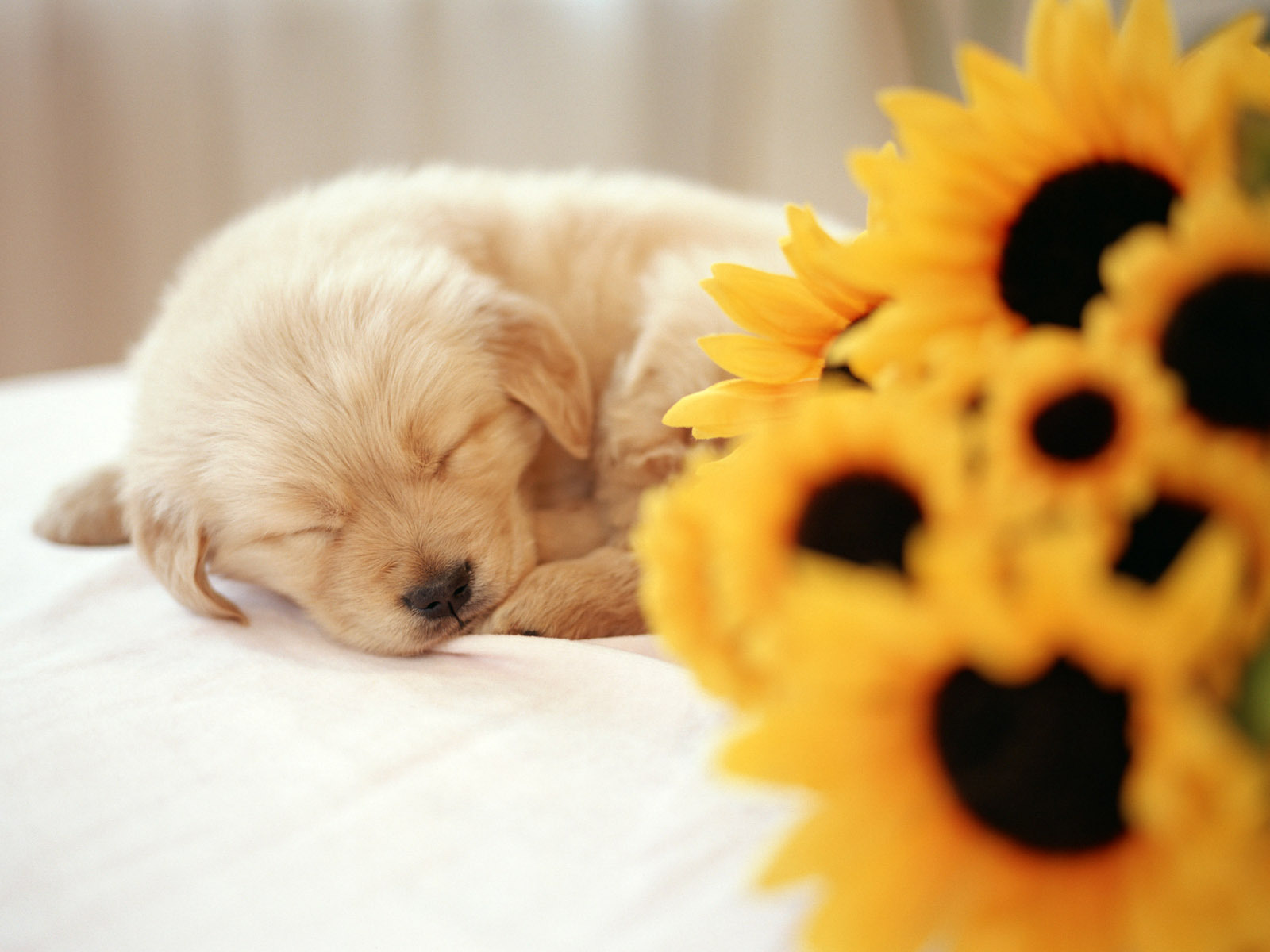 Cute Puppies Backgrounds 40 Wallpapers Adorable Wallpapers