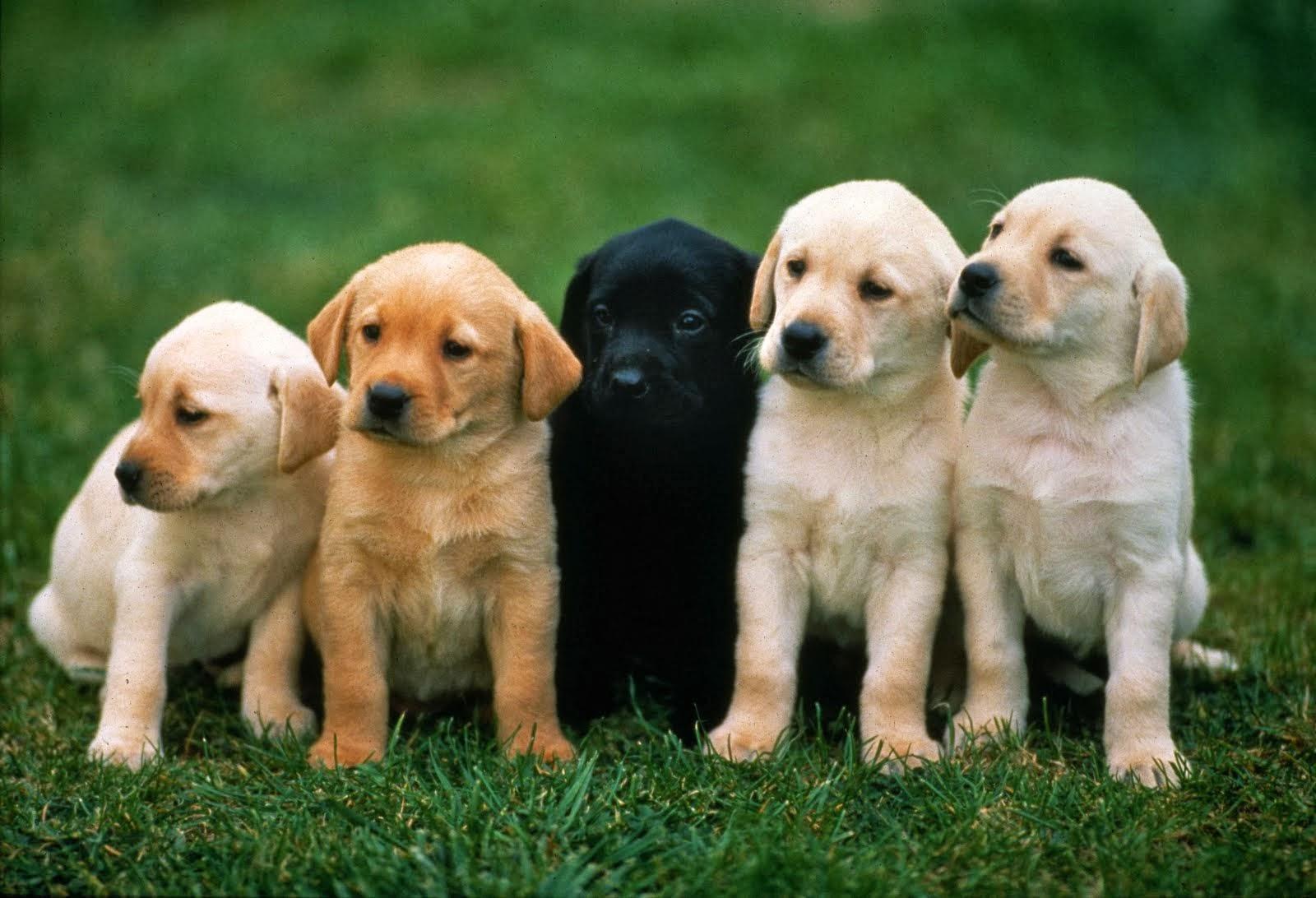 imagen de perro - HD1600×1092