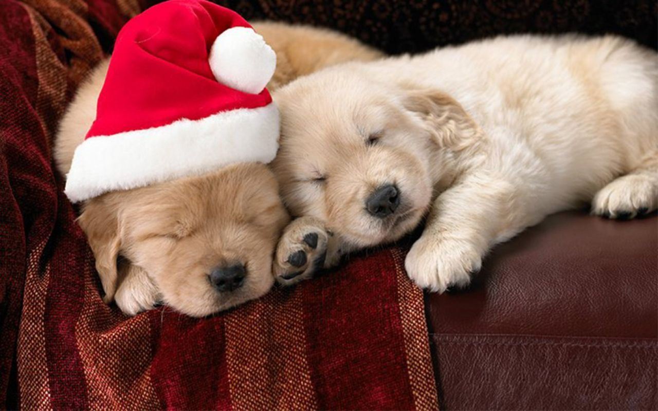 Cute Puppies Wallpapers 50 Wallpapers – Adorable Wallpapers