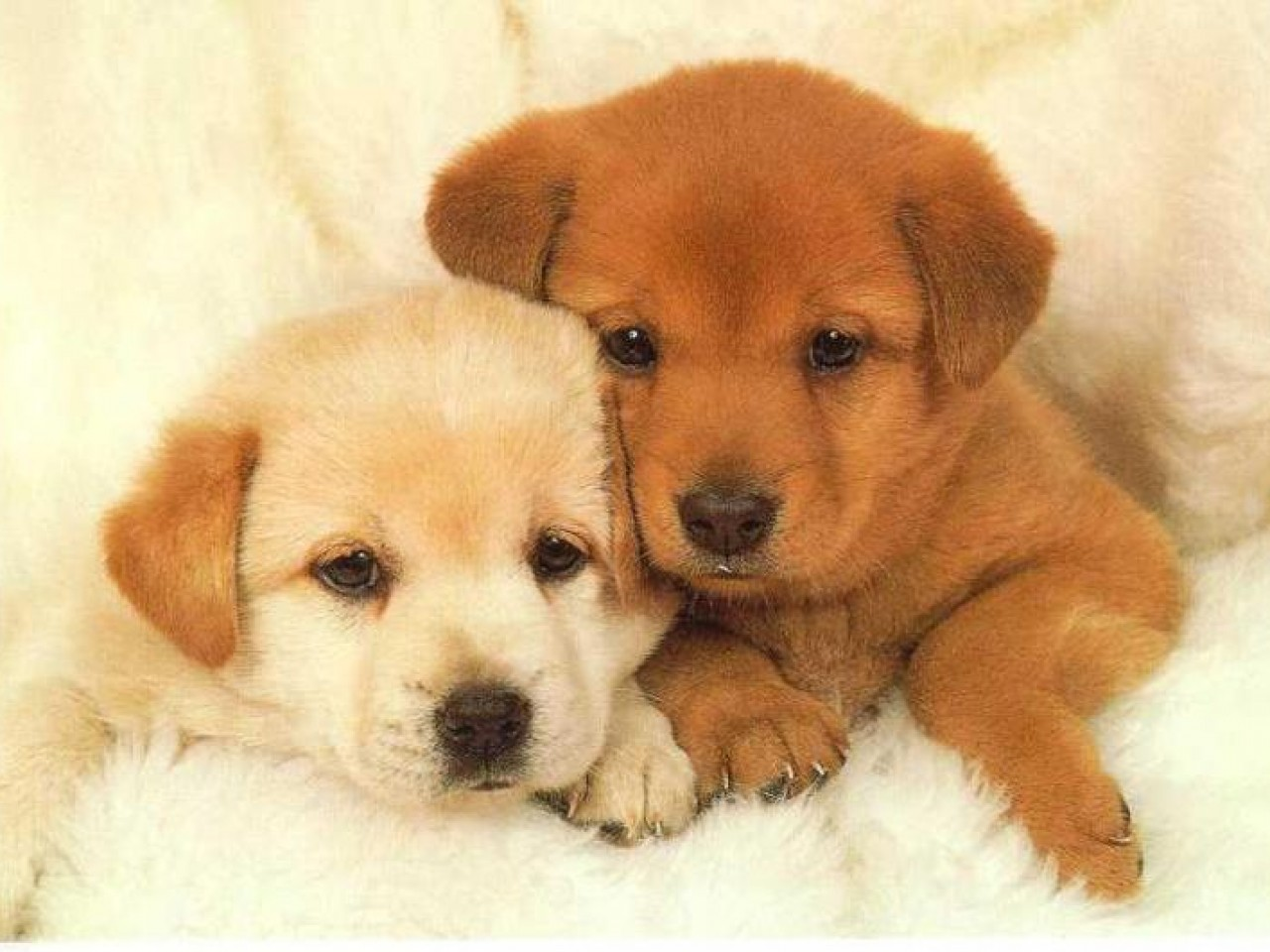 Puppy Wallpapers Cute Puppy Pictures Images on the App