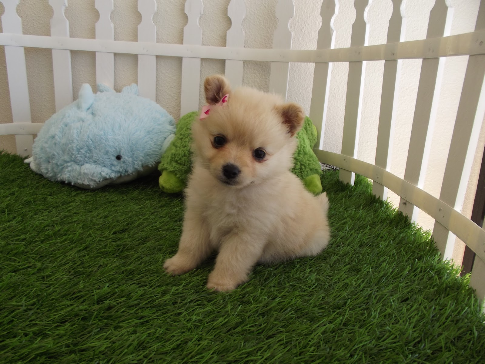 Collection Of Cute Puppy Wallpaper On HDWallpapers 1600x1200