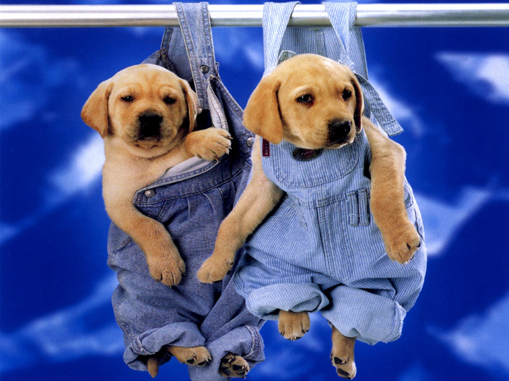Cute Puppy wallpaper Cute Puppy Pictures for Wallpaper Download Free 1024x768